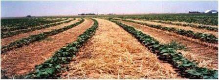 Ресурсосберегающие технологии в сельском хозяйстве